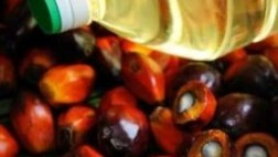 The Benefits of Palm Oil for Health, Not Yet Realized by the Public